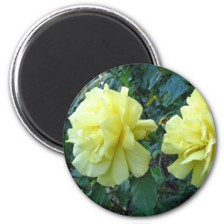 Yellow Roses Magnet