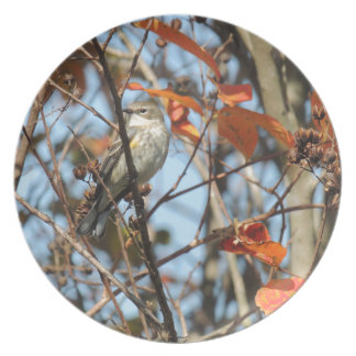 Yellow-rumped Warble in Winter Plate