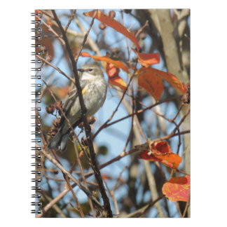 Yellow-rumped Warble in Winter Spiral Notebook