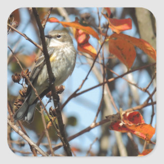 Yellow-rumped Warble in Winter Square Sticker