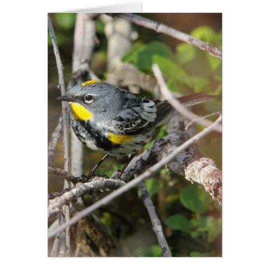 Yellow-rumped Warbler II Card