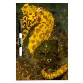 Yellow Seahorse Dry-Erase Whiteboard