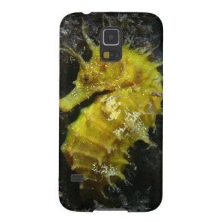 Yellow Seahorse | Hippocampus Guttulatus Galaxy S5 Cover