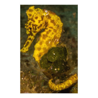 Yellow Seahorse Stationery Paper