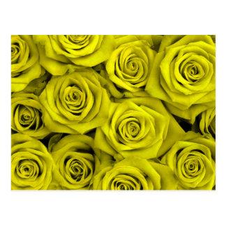 Yellow Spectacular Roses Postcard