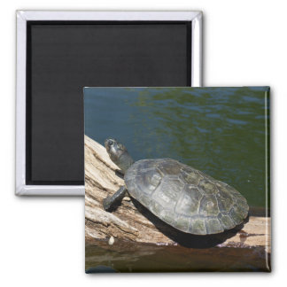 Yellow-spotted Amazon turtle Magnet