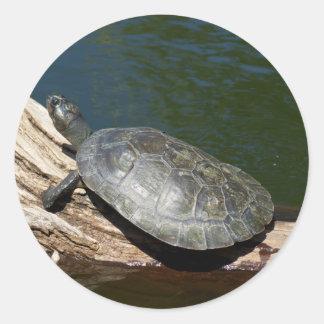 Yellow-spotted Amazon turtle Round Sticker