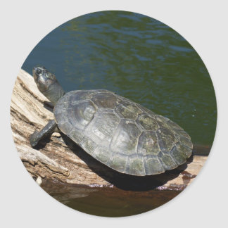 Yellow-spotted Amazon turtle Round Stickers
