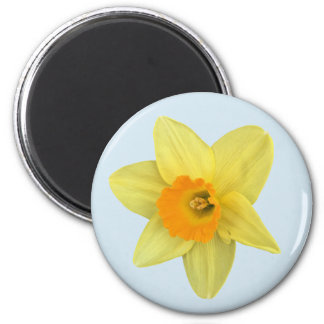 Yellow Spring Daffodil on Pale Blue Magnet