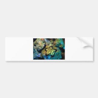 Yellow starfish Pacific Ocean Bumper Sticker