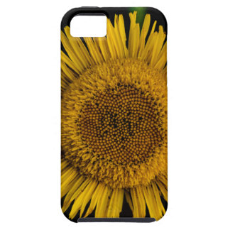Yellow sun Flower iPhone 5 Covers