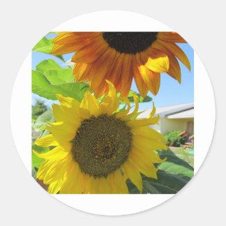 yellow sunflower and red sunflower round sticker