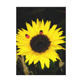 Yellow Sunflower And Two Ladybugs Canvas Print