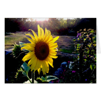 Yellow Sunflower at Sunset --- Card
