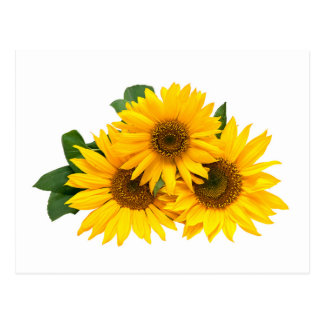 Yellow Sunflower Blank Floral Greeting Post Card