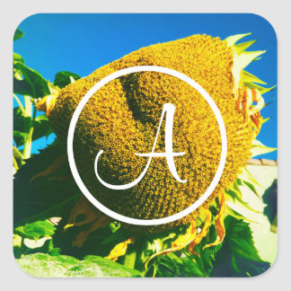 Yellow sunflower close-up photo custom monogram square sticker