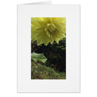 Yellow sunflower with mornings dew on a spiderweb. card