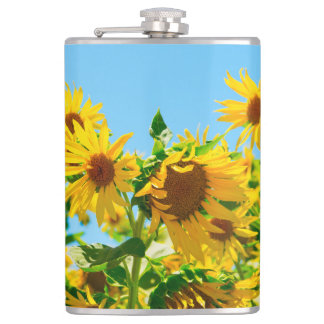 Yellow Sunflowers in a Field Hip Flask