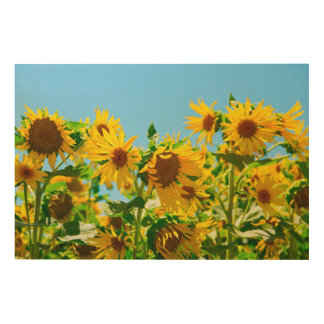 Yellow Sunflowers in a Field Wood Wall Decor