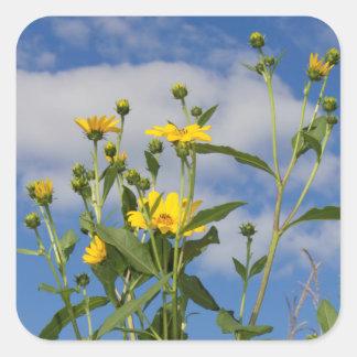 Yellow Sunflowers in Iowa Photo Square Sticker
