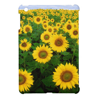 Yellow Sunflowers iPad Mini Covers