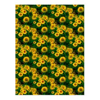 yellow sunflowers postcard