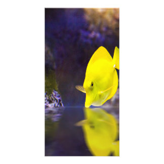 Yellow Surgeon fish looks at it's reflection Custom Photo Card