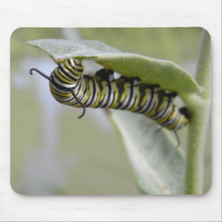 Yellow swallow tail butterfly caterpillar mousepad