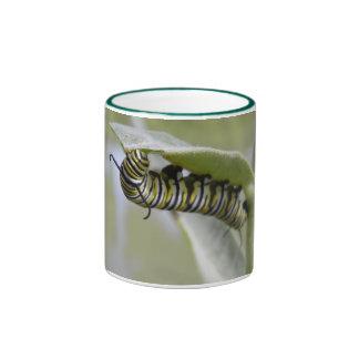 Yellow swallow tail butterfly caterpillar mug