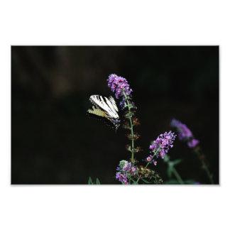 Yellow Swallowtail Butterfly Print Photo Art