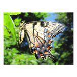 Yellow Swallowtail ~ Photo