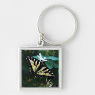 Yellow Swallowtail Silver-Colored Square Key Ring