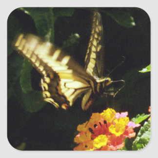 Yellow tail butterfly in flight square sticker