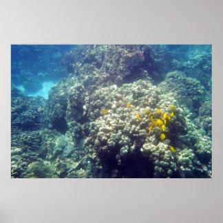 Yellow Tang Underwater Poster Print