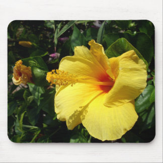 Yellow Thai wildflower Mouse Pad