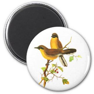 Yellow-throated Laughingthrush 6 Cm Round Magnet