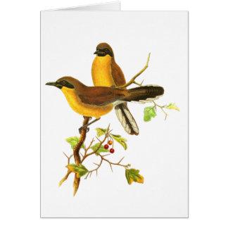 Yellow-throated Laughingthrush Card