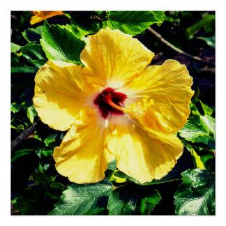 Yellow Tropical Hibiscus