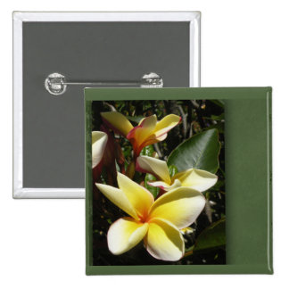 Yellow tropical plumeria flower buttons