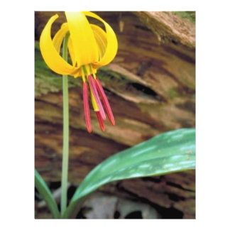 Yellow trout lily custom flyer