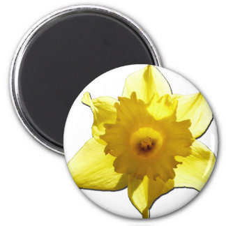 Yellow Trumpet Daffodil 1.0 6 Cm Round Magnet