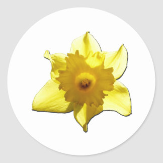 Yellow Trumpet Daffodil 1.0 Classic Round Sticker
