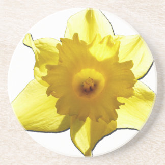 Yellow Trumpet Daffodil 1.0 Coaster