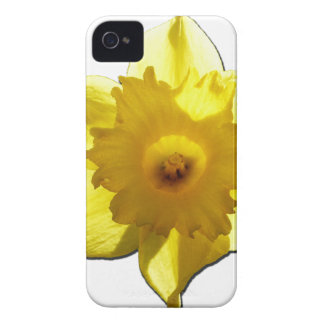 Yellow Trumpet Daffodil 1.0 iPhone 4 Case