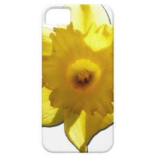 Yellow Trumpet Daffodil 1.0 iPhone 5 Cases