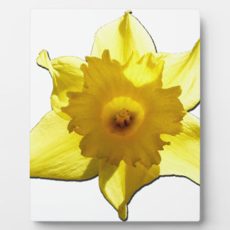 Yellow Trumpet Daffodil 1.0 Plaque