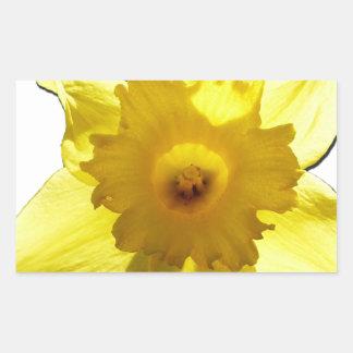 Yellow Trumpet Daffodil 1.0 Rectangular Sticker