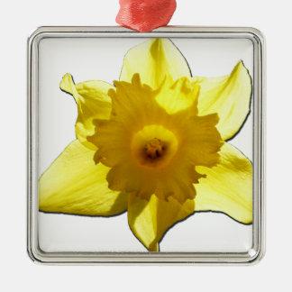 Yellow Trumpet Daffodil 1.0 Silver-Colored Square Decoration
