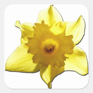 Yellow Trumpet Daffodil 1.0 Square Sticker