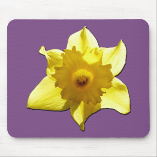 Yellow Trumpet Daffodil 1.2 Mouse Pad